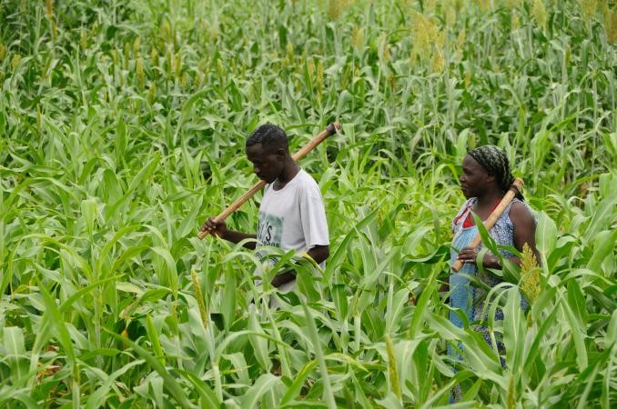 InterAmerican Institute for Cooperation in Agriculture and   Agricultural Productivity in the Caribbean: What Does It Mean?
